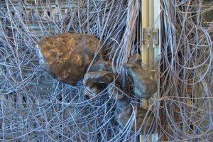 Caught Lobster, 2005, Toren van Babel, Utrecht, bronze and telephone exchange