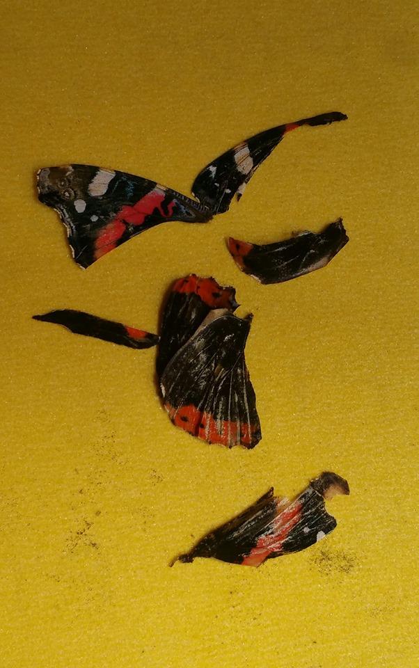 Stukjes vlinder op schuurpapier