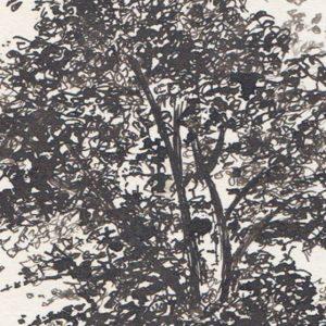 ergens in een boom