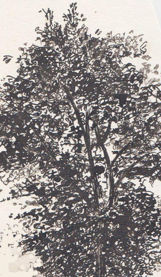 ergensindeboom